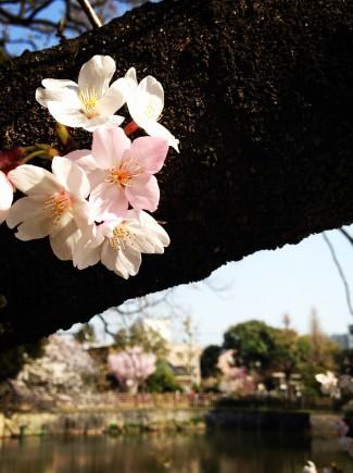 飯島写真1